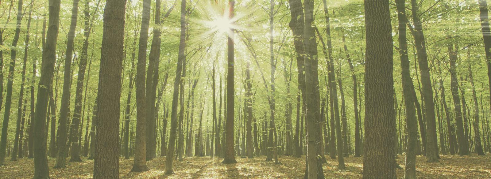 light-thru-trees-for-site